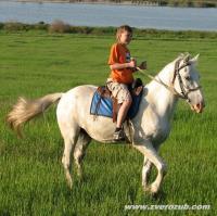 обучение первым навыкам верховой езды