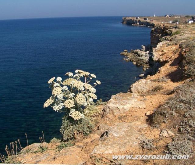 Природа черного и азовского морей