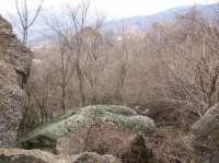 Камень Твиста теперь зарос кустарником