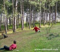 скользим по сосновым иголкам и дышим фитонцидами