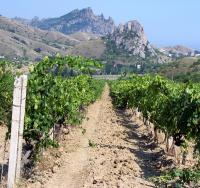 виноградники долины Отуз