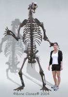 скелет гигантского медведя с Аляски